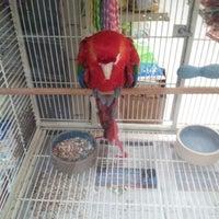 รูปภาพถ่ายที่ Brothers Pets โดย Renayda H. เมื่อ 10/11/2012