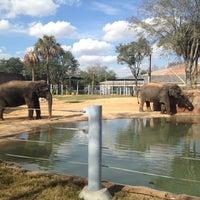 Снимок сделан в Houston Zoo пользователем Scott J. 1/20/2013