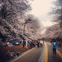 3/20/2013にS_W_Dが駒沢オリンピック公園で撮った写真