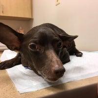 11/14/2016にNonaがFour Paws Animal Hospitalで撮った写真