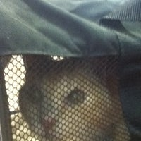5/2/2013にNonaがFour Paws Animal Hospitalで撮った写真