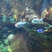 12/16/2012にMatt M.がSaltwater Grillで撮った写真