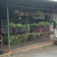 Green World Nursery Garden Center