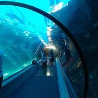 Photo prise au Maui Ocean Center, The Hawaiian Aquarium par MisterEastlake le6/14/2018