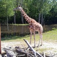 6/16/2013 tarihinde Dominick W.ziyaretçi tarafından Minnesota Zoo'de çekilen fotoğraf