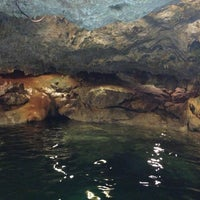 รูปภาพถ่ายที่ Cenote San Ignacio โดย Tere A. เมื่อ 3/31/2013