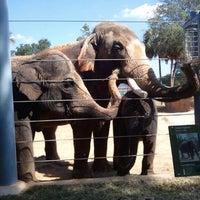 Снимок сделан в Houston Zoo пользователем John M. 10/4/2012