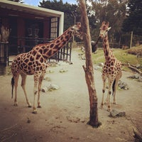 12/1/2012 tarihinde Yana G.ziyaretçi tarafından Wellington Zoo'de çekilen fotoğraf