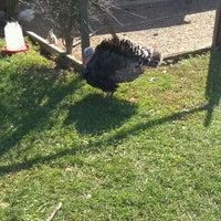 10/8/2011にJoshua Z.がSprout Creek Farmで撮った写真