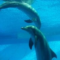 7/15/2012 tarihinde Wanda I.ziyaretçi tarafından Texas State Aquarium'de çekilen fotoğraf