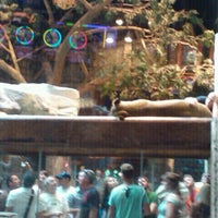 Lion Habitat At Mgm Grand Hotel Now Closed The Strip 27 Tips
