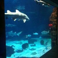 Photo Taken At Virginia Aquarium Amp Marine Science Center By Richmond M