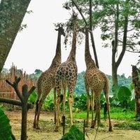 รูปภาพถ่ายที่ Singapore Zoo โดย Lorie เมื่อ 5/18/2013