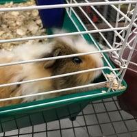 Petland - Pet Store in Honolulu