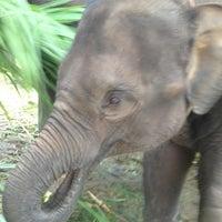 Foto scattata a Maesa Elephant Camp da Benoit M. il 10/22/2012