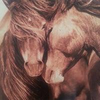 Foto scattata a The Wild Horses of Sable Island da Elinor S. il 6/16/2013
