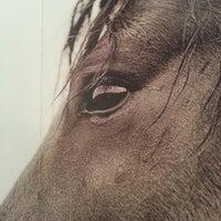 Foto scattata a The Wild Horses of Sable Island da Elinor S. il 6/19/2013