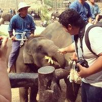 Foto scattata a Maesa Elephant Camp da MissIzss il 2/22/2013