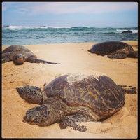 Foto tomada en Laniakea (Turtle) Beach por Isabel P. el 5/21/2013