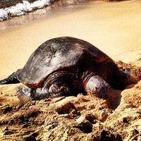 Foto tomada en Laniakea (Turtle) Beach por Isabel P. el 5/26/2013