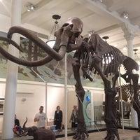Foto scattata a American Museum of Natural History da Rick D. il 5/17/2013