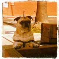รูปภาพถ่ายที่ Dogtown Coffee โดย Assaf R. เมื่อ 3/21/2013
