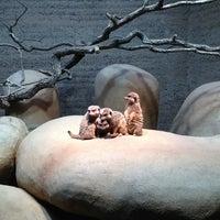 Снимок сделан в Zoo Basel пользователем Chris t. 2/24/2013