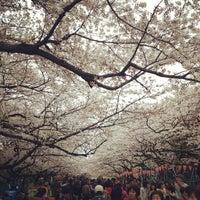 3/29/2013 tarihinde kazuki o.ziyaretçi tarafından Ueno Park'de çekilen fotoğraf