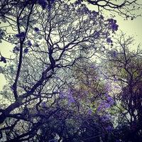 Foto tomada en Parque México por Alejandra V. el 4/15/2013