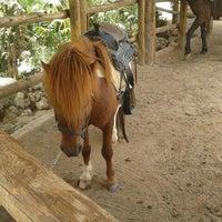 6/6/2013 tarihinde Cagri O.ziyaretçi tarafından Laren Safari Park'de çekilen fotoğraf