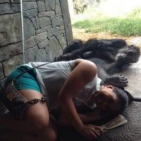 7/27/2013 tarihinde Heatherly L.ziyaretçi tarafından Chimpanzee Exhibit'de çekilen fotoğraf