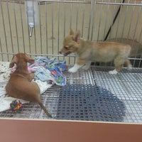 Puppies N Love Pet Store In Gilbert