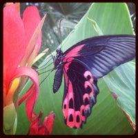 Photo taken at Butterfly Wonderland by Jenn G. on 7/16/2013