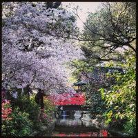 3/25/2013にArzu Y.がDescanso Gardensで撮った写真