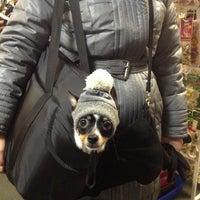 Das Foto wurde bei Cats&Dogs von Валерий am 12/15/2012 aufgenommen