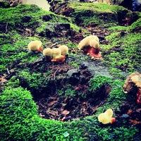 6/8/2013 tarihinde Dimkaziyaretçi tarafından Arnold Arboretum'de çekilen fotoğraf