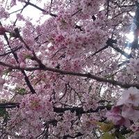 3/20/2013 tarihinde Roberto Miki I.ziyaretçi tarafından Ueno Park'de çekilen fotoğraf