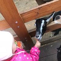 43edb665 ... Снимок сделан в Контактный зоопарк Vnukovo outlet village пользователем  Ekaterina B. 10/14/ ...