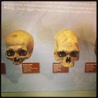 6/16/2013에 Chris M.님이 University of Pennsylvania Museum of Archaeology and Anthropology에서 찍은 사진