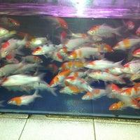 Download 5600 Koleksi Gambar Ikan Nus HD Gratis