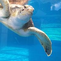 6/24/2013 tarihinde Pedroziyaretçi tarafından Texas State Aquarium'de çekilen fotoğraf