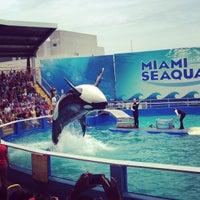 รูปภาพถ่ายที่ Miami Seaquarium โดย Gabriel H. เมื่อ 7/21/2013
