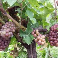 รูปภาพถ่ายที่ Bellview Winery โดย Bellview Winery เมื่อ 1/14/2014