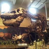 11/27/2012 tarihinde Serge C.ziyaretçi tarafından Carnegie Museum Of Natural History'de çekilen fotoğraf
