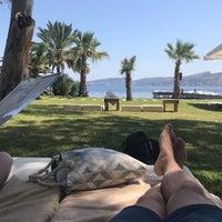 Photo prise au Dodo Beach Club par Caner le7/11/2019