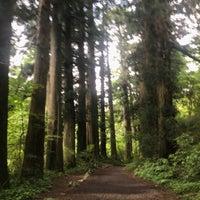 6/2/2018にmaru j.が箱根旧街道 杉並木で撮った写真