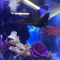 Aquatic Warehouse - Kearny Mesa - 2 tips from 220 visitors