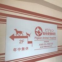 病院 ピジョン 動物
