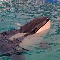 รูปภาพถ่ายที่ Miami Seaquarium โดย Ann W. เมื่อ 10/25/2011