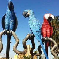 ... Foto tirada no(a) Praça das Araras por João A. em 8  ... a26a36d737aed